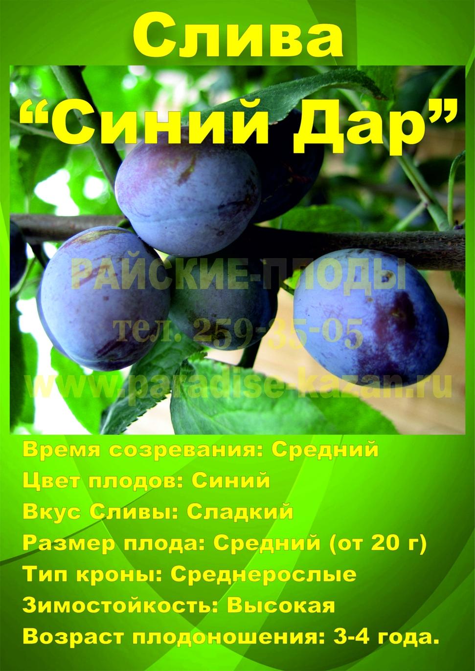 Земляника садовая Фурор  Земляника  Семена и саженцы